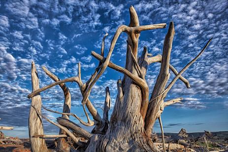 Driftwood Sunrise  (N17036.jpg)