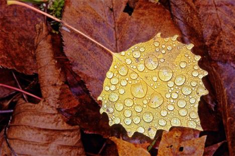Raindrops    (A62.jpg)