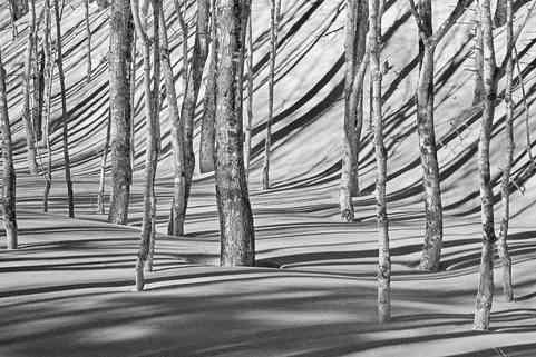 Winter Shadows   (W348.jpg)
