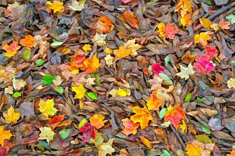 Autumn Tapestry   (A15114.jpg)