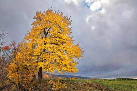 Fall Sky   (A13096.jpg)