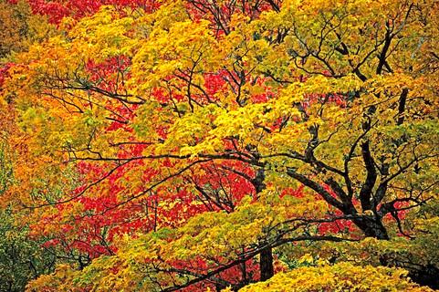 Fall Colours   (A208.jpg)