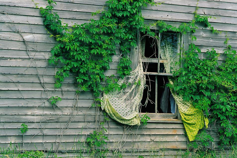 Curtains in Summer   (P106.jpg)