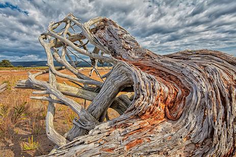 Driftwood, Bay of Fundy  (N20095.jpg)