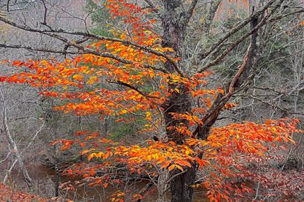 Fall Hardwoods   (A16009.jpg)