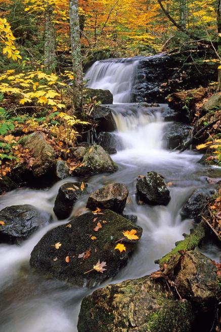 Autumn Stream   (A406.jpg)