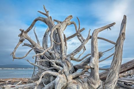 Driftwood Bay of Fundy  (N14158.jpg)