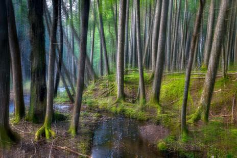 Deep Forest  (N13154.jpg)