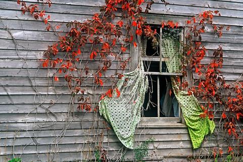 Curtains in Fall   (P239.jpg)