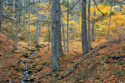 Autumn Forest    (A20111.jpg