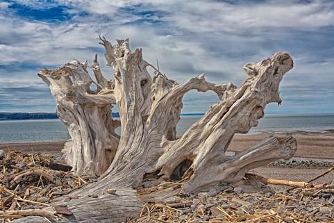 Driftwood,Bay of Fundy  (N16028.jpg)