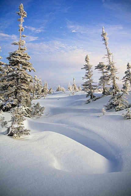 Winter Beauty   (W210.jpg)
