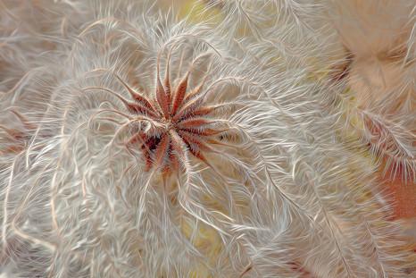 Fall Seeds   (A18104.jpg)