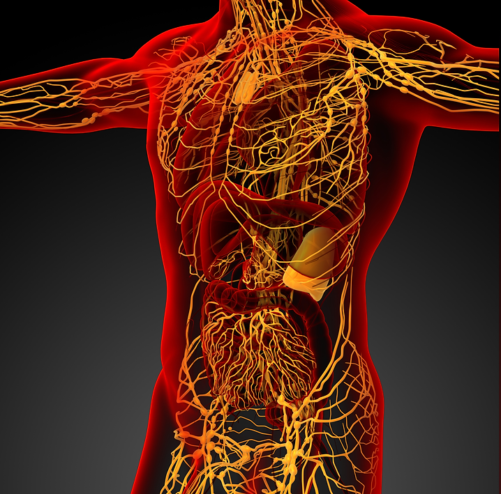 Lymph Red Thoracic.png