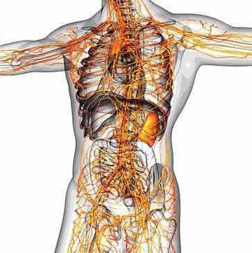 Lymph Orange anterior.jpg