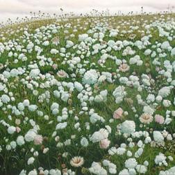 Northland Flower Show