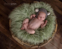 newborn furs fluffy (12).JPG