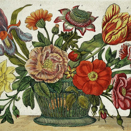"""Analysis of Maria Sibylla Merian's """"Preface to the Reader"""""""
