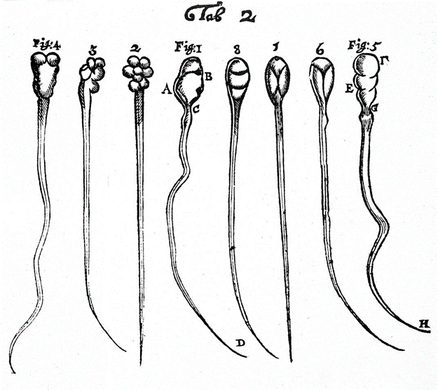 Leeuwenhoek's Early Microscopic Observations of Rabbit Sperm and Dog Sperm. n.d. Photograph. Wikimedia Commons.