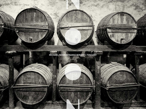 NOON Dynamic Winery | Tuscany wine project