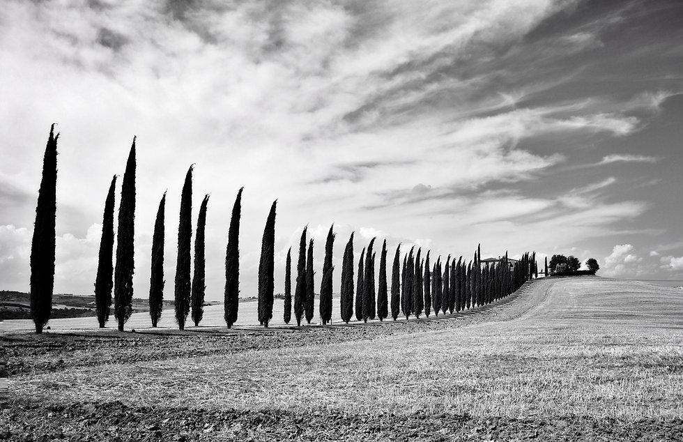 noon-winery-panorama-LOW.jpg