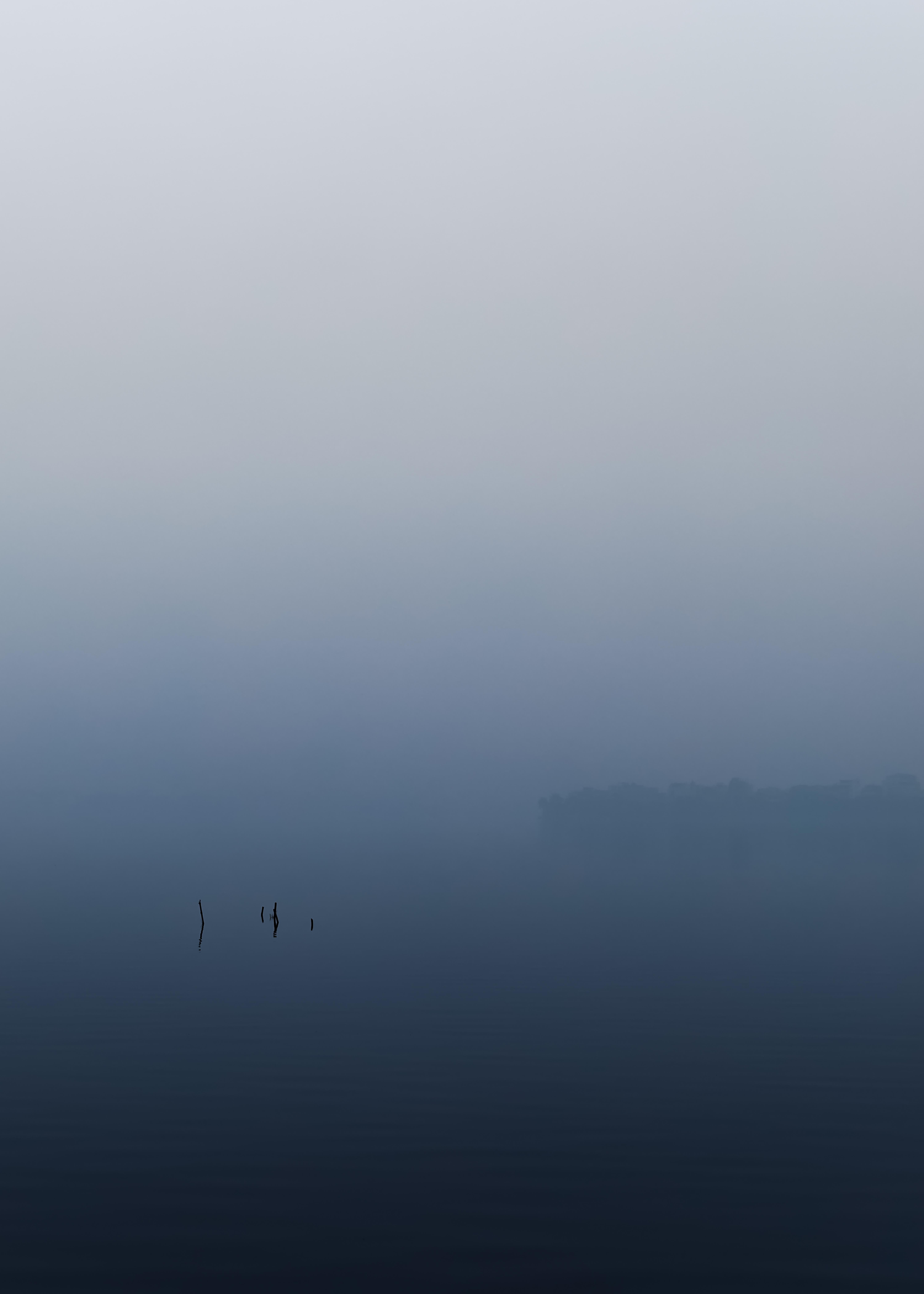 Sticks in Fog