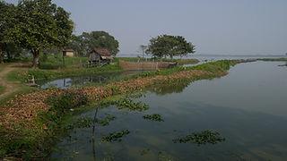 Les Wetlands