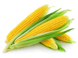 organic-corn.jpg