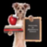 dog holding books puppy training