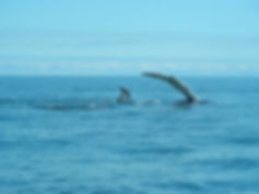 Humpback Islad Cruises Campobello Island