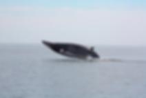 Minke Whale Island Cruises Campobello Island