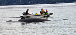 Whales Campobello Island