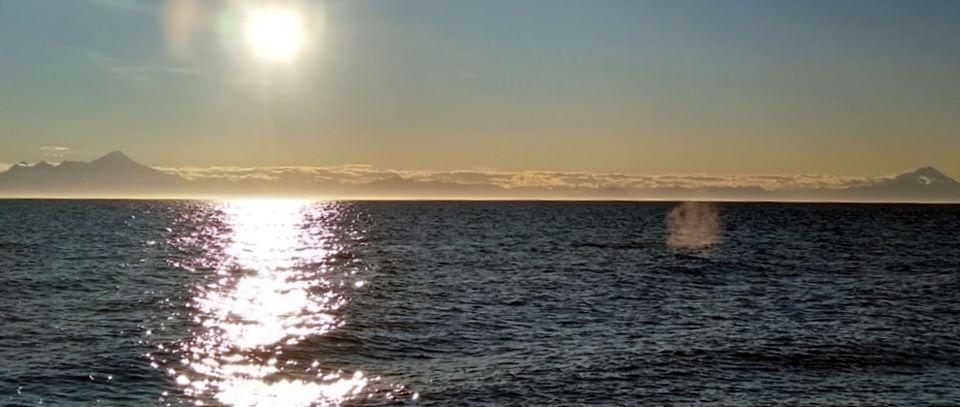 Iliamna Redoubt Whale