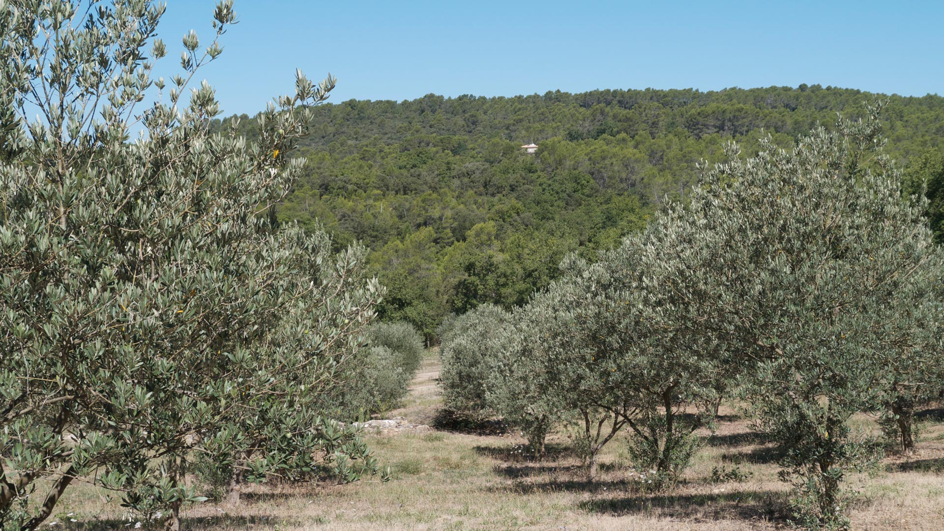 Mapliers Olive grove