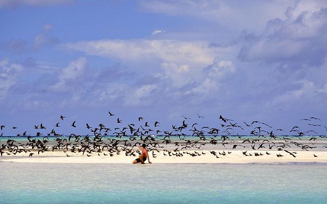 ile aux oiseaux 2.jpg