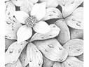 Flower in Leaves