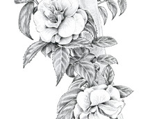 Camellias on Tree