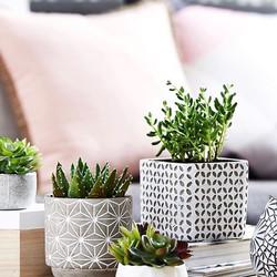 Everyone needs little green friends 🌿🌿 #plantlife #plantsarefriends #plantbasedbeauty #greenery #g