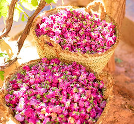 Dried-rose-buds-e72bd60e3c17.jpg
