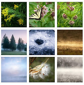 Grid of Photographers Favorite Images