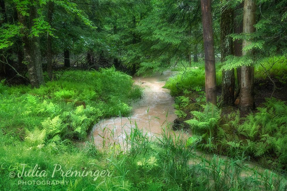 Spring Flood Forest