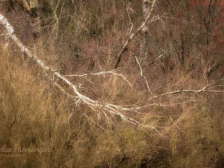 Catskills in April—Signs of Awakening