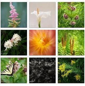Grid of Botanical Images