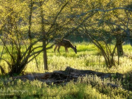 Celestial, Sparkling Spring Mornings in the Catkills