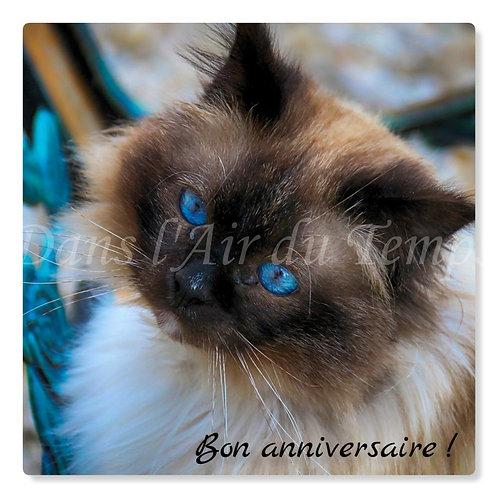 Carte photo Joyeux Anniversaire 11 chat sacré de birmanie