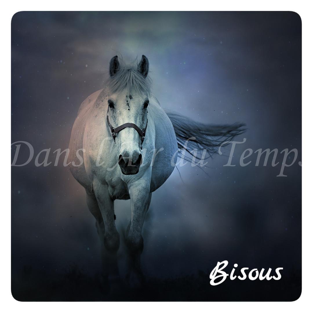 carte bisous cheval blanc.jpg