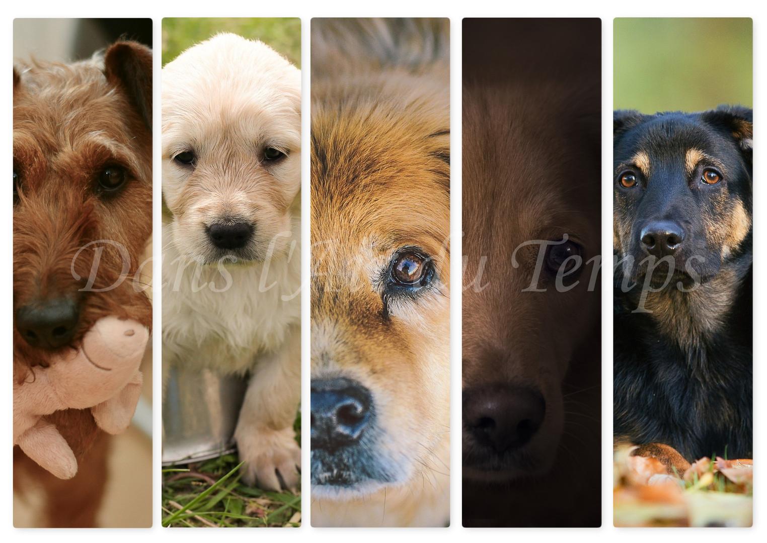 marque page chien 2.jpg