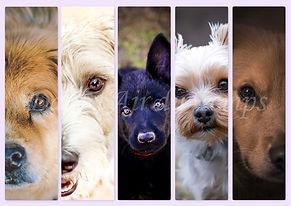marque page chien