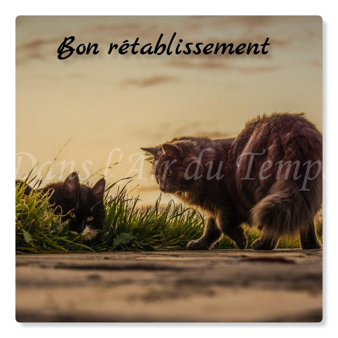 cartebonretablissement16.jpg