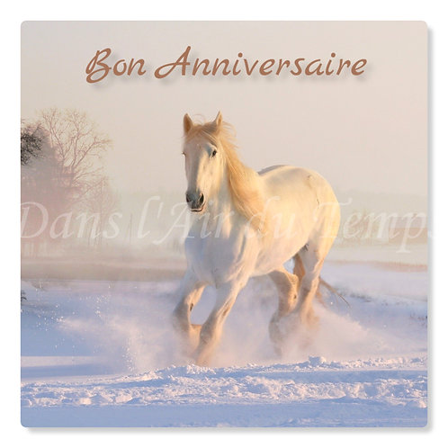 Carte photo Joyeux Anniversaire Cheval blanc
